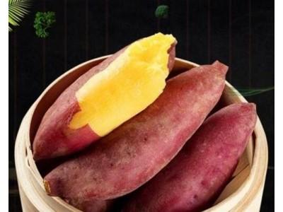 金手指板栗红薯 煮熟后表皮会自动裂开,同时肉不带筋,口感细腻