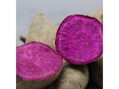 新鲜紫薯5斤 农家自种板栗味地瓜番薯 红薯紫芋头新鲜蔬菜国