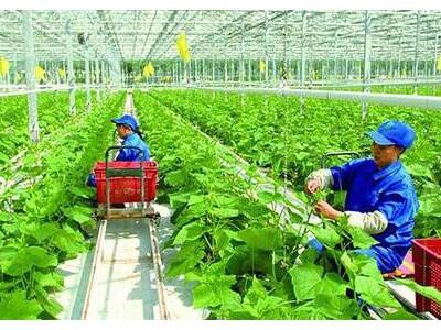 重庆将打造20个智慧农业示范基地